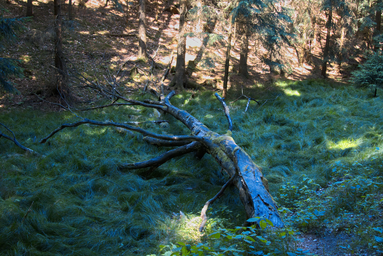 Ast im Wald