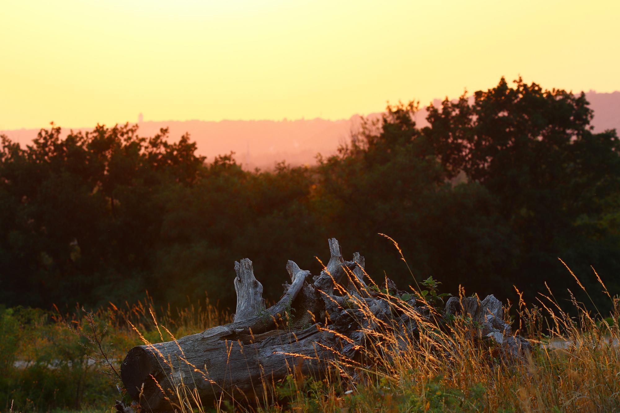 Baumstumpf in der Abendsonne