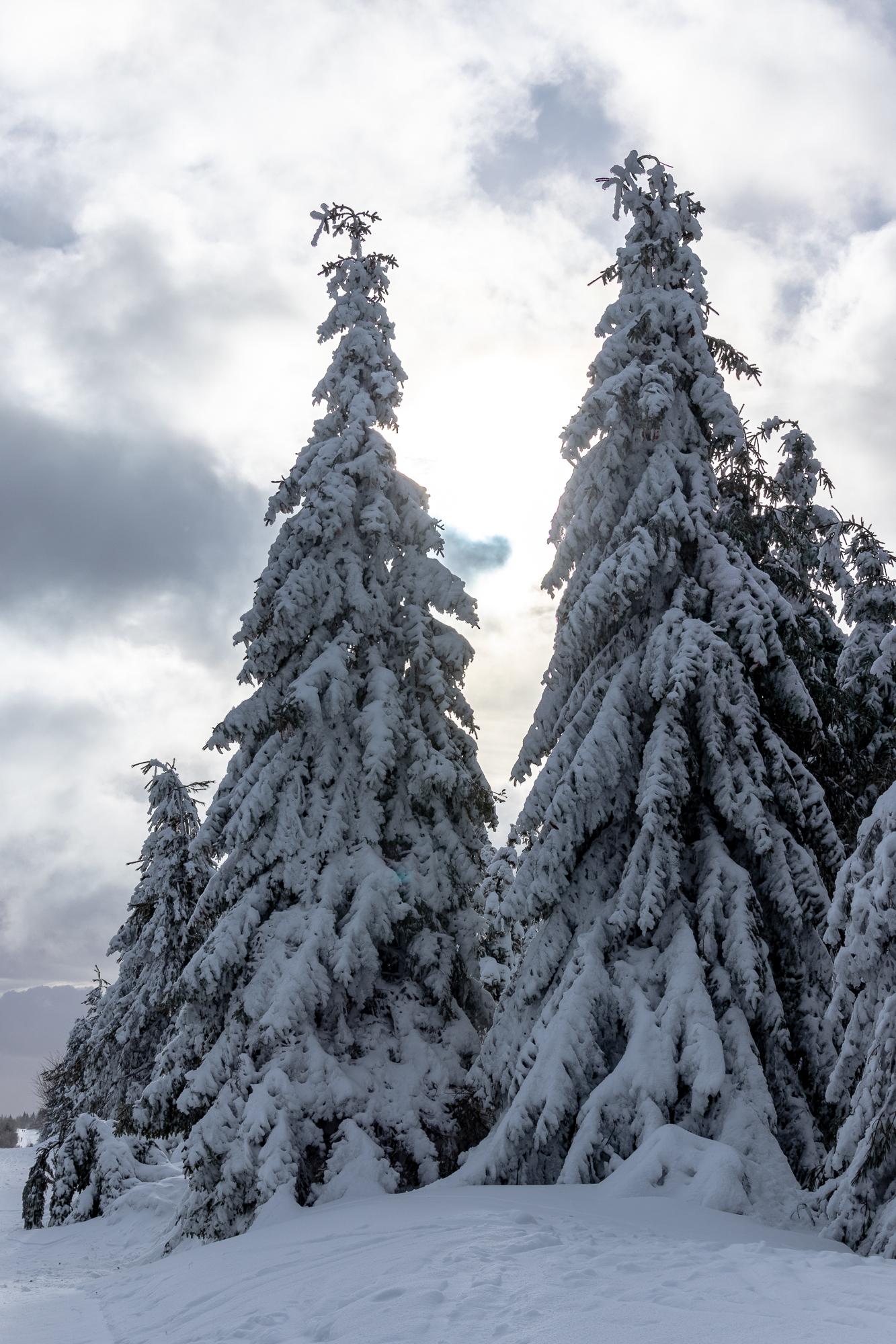 Die 2 Bäume